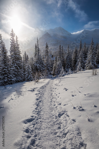 Snowy path to the winter shelter in the mountains, Poland