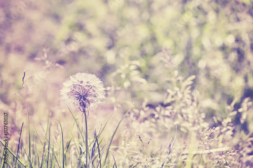 Retro stylized dandelion on field, shallow depth of field. - 117763037