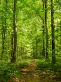 Lasy leśne latem