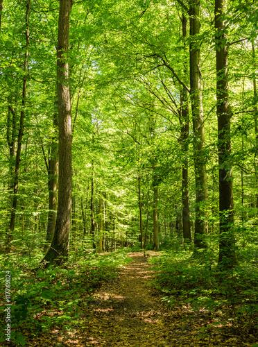 Staande foto Weg in bos Wald Pfad Bäume Sommerzeit