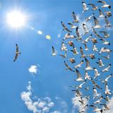 flying seagull birds - 117785092