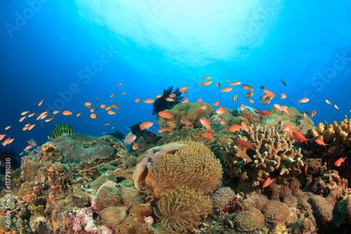 Tuinposter Koraalriffen Coral reef underwater sea ocean