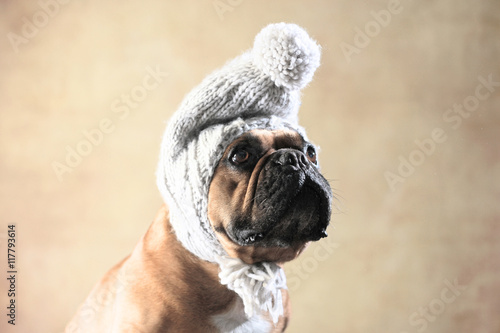 Deurstickers Franse bulldog Französische Bulldogge mit Wintermütze