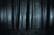 Dark foggy forest - 117810040