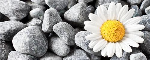 kamienie-i-kwiat