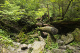 Moss growing in big fallen tree. tree trunk with moss. Landscape