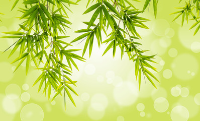 Bamboo leaves on bokeh background