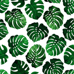 leaves monstera
