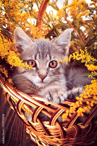 Little kitten sitting in the basket with flowers