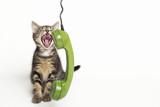 Katze im Gespräch am Telefon - 117900429