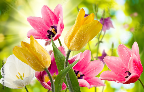 Fototapety, obrazy : image of beautiful flowers in the garden closeup
