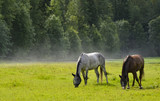 Horses on field after rain