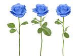 Fototapety Trio blue roses