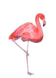 Fototapety Pink flamingo isolated