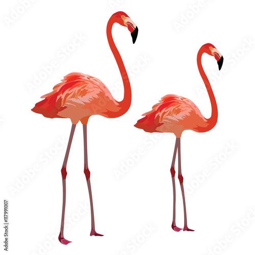 Foto op Aluminium Flamingo Flamingo birds Vector isolated on white