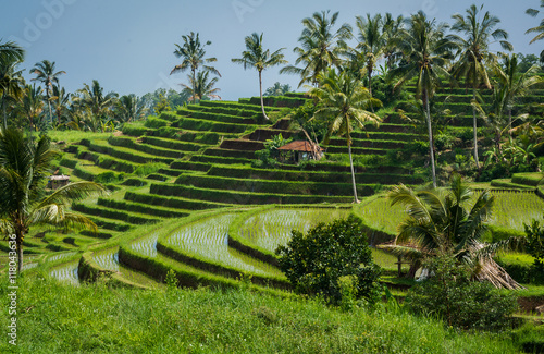 Plexiglas Bali Rizières de Bali