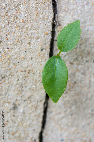 Poster plant growing through cracked wall Concept of business break through