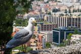 Albatross in Monte Carlo