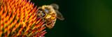 Honeybee collecting pollen - 118075267