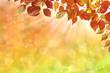 Herbst 129