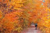 Autumn woods - 118081403