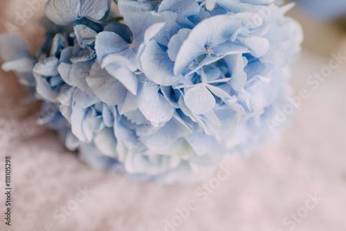 Póster bud blue hydrangeas
