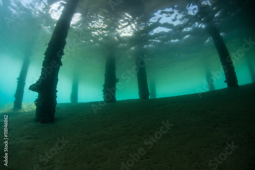 Poster Water planten Underwater Scenery Below Pier