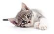 Quadro Kitten on white background.