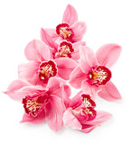 Fototapety Pink orchid flowers