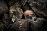 Still life with human skull on the rocks