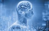 anatomy, brain, x-ray