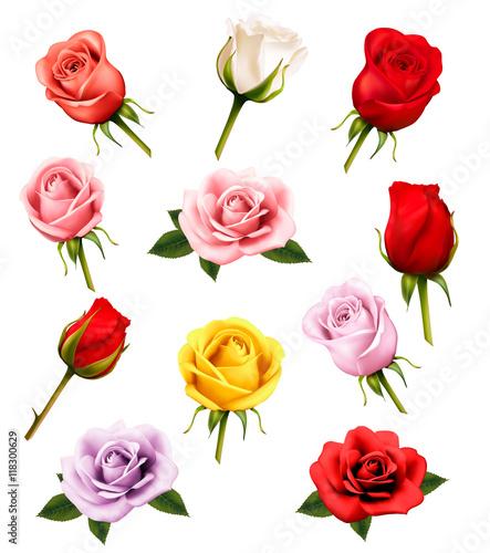 Zdjęcia na płótnie, fototapety, obrazy : Set of different roses. Vector.