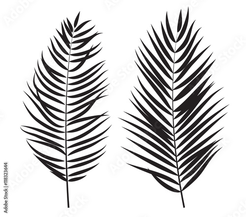 sylwetka-lisc-drzewa-palmowego-na-bialym-tle