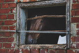 Lonely horse in a stall