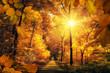 Goldener Herbst mit viel Sonne im Wald lädt zu einem Spaziergang ein