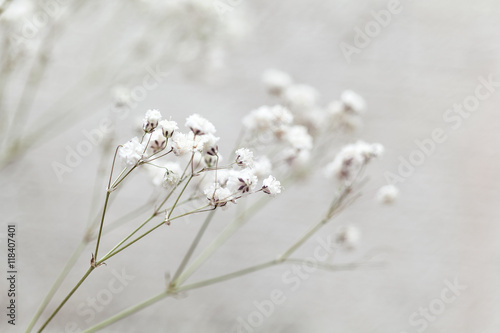 Selective focus of Tiny white flowers gypsophila paniculata. small white flowers - 118407401