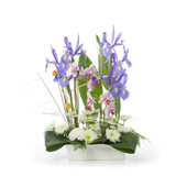 Floral arrangement made of  Iris, orchids and chrysanthemum