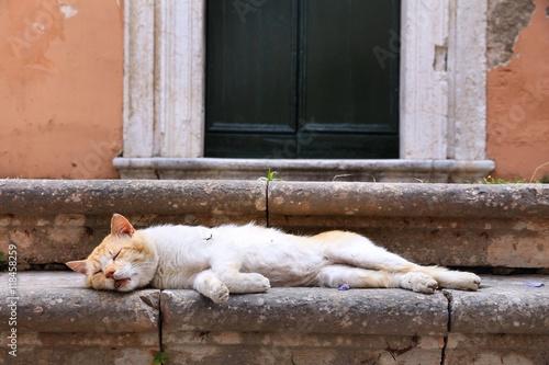 Zdjęcia na płótnie, fototapety, obrazy : Sleeping cat in Greece