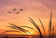 Orange sky on sunset or sunrise with flying birds