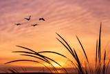 Orange sky on sunset or sunrise with flying birds - 118504885