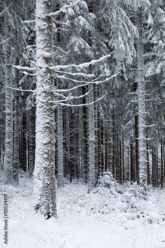 Papiers peints Nature Trees covered with snow in France, Vosges.
