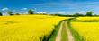 Small Dirt Road through Fields of Oilseed Rape in Bloom, Spring Landscape under Blue Sky