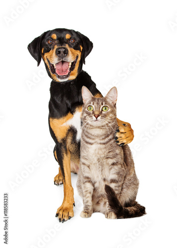 Poster Funny Photo of Dog With Arm Around Cat