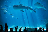 Children Silhouettes in large Aquarium with Fish and Whale Shark  - 118606275