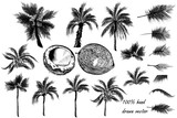Vector set of detailed palm trees for design