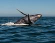 Dancing humpback whale