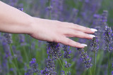 womans hand touching lavender