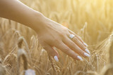 womans hand touch wheat