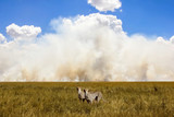 African cheetahs in the background of the sky and clouds. Smoke in the savannah.