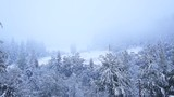 Carpathians Winter - House on the hill./The house on snow-covered hillside among the pines with snow.
